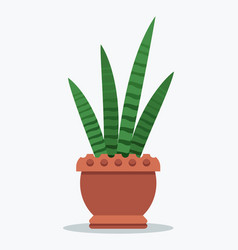 sansevieria with long striped leaves in big clay vector image