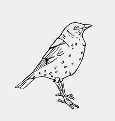 hand-drawn pencil graphics small bird engraving vector image