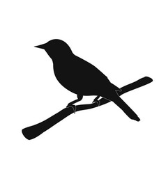 silhouette of the bird on branch vector image