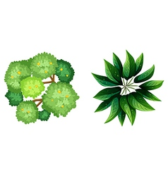A topview of a plant vector image vector image