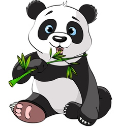 baby panda sitting and munching on bamboo vector image