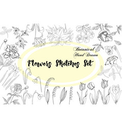 flowers sketches hand drawn botanical elements vector image