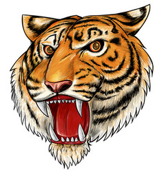 hand drawn tiger isolated on white background vector image