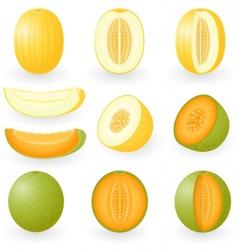 melon vector image vector image