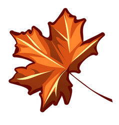 autumn maple leaf isolated on a white background vector image