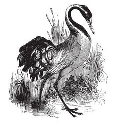 Common crane vintage vector