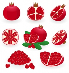 pomegranate vector image vector image