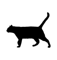 Cat on white vector