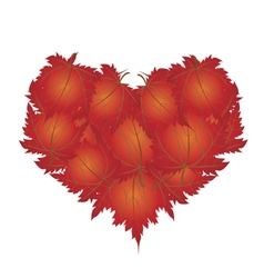 Red Maple Leaves in A Heart Shape vector