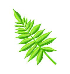 Royal fern decorative leaf vector
