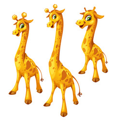 three cartoon giraffe on white background vector image vector image