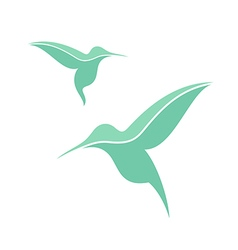 Exotic bird Hummingbird vector