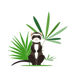 Gray ferret in full growth sits in tropical leaves vector