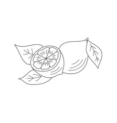 lemon icon sketch vector image