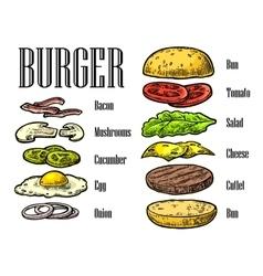 Burger ingredients on black background vector