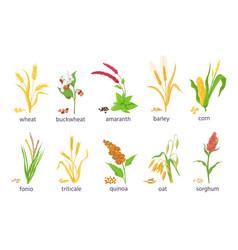 Cartoon farm cereal crops and grain grass plants vector