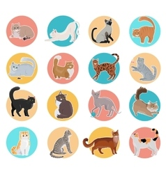 Collection of Icons with Cat in Flat Design vector image