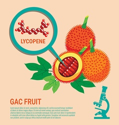 Gac Fruit health Benefits of Lycopene vector image