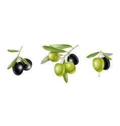 Olive realistic set vector