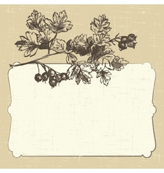 postcard with hawthorn vector image