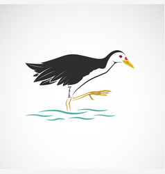 White breasted waterhen isolated on vector