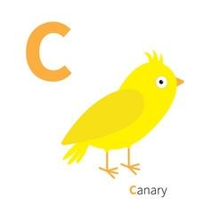 Letter c canary bird zoo alphabet english abc with vector