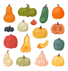 Fresh pumpkin decorative seasonal ripe food vector