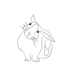 rabbit scratching ear lines vector image