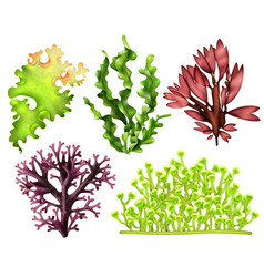 Realistic sea weeds food set vector