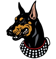 Doberman head vector