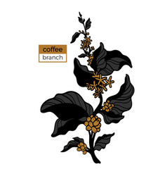 template branch coffee 3color 4 vector image