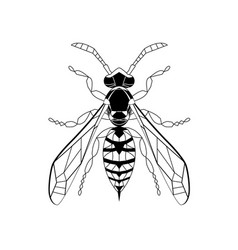 Wasp line drawing cartoon for adult antistress vector