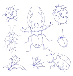 Insects sketch vector