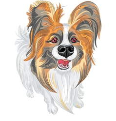 cute smiling Papillon dog vector image vector image
