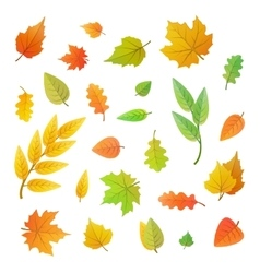 Big set of cute leaves from different trees on vector image vector image