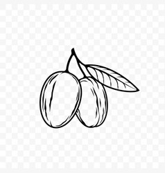 Argan oil nut and leaf sketch icon vector