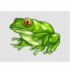 green frog on transparent background vector image