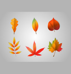 autumn falling leaves isolated on gray background vector image