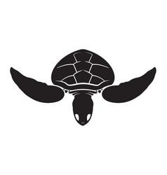 graphic isolate sea turtle vector image