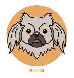 Portrait of pekingese vector