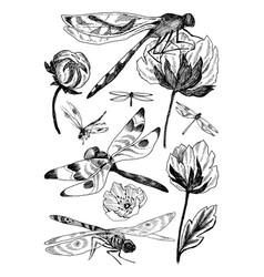 Set of floral elements with black and white vector