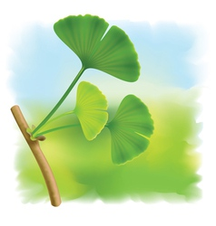 twig with leaves of ginkgo biloba on fullcolor bac vector image vector image