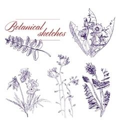 Botanical flowers vector