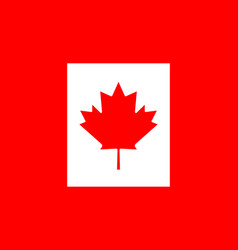 canada flag canadian leaf red maple on white vector image