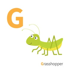 Letter G Grosshopper Zoo alphabet Insect English vector image