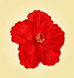 Red hibiscus simple tropics flower vector image