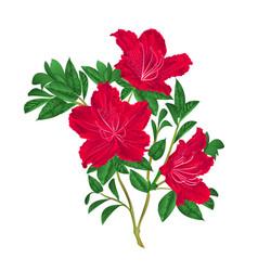 Red rhododendron twig vintage vector
