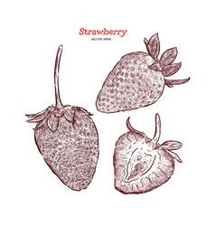 set strawberry hand drawn vector image