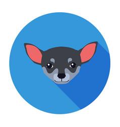 small muzzle chihuahua dog cartoon drawing vector image