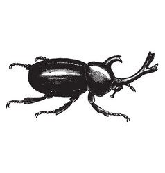 Xylotrupes dichotomus vintage vector